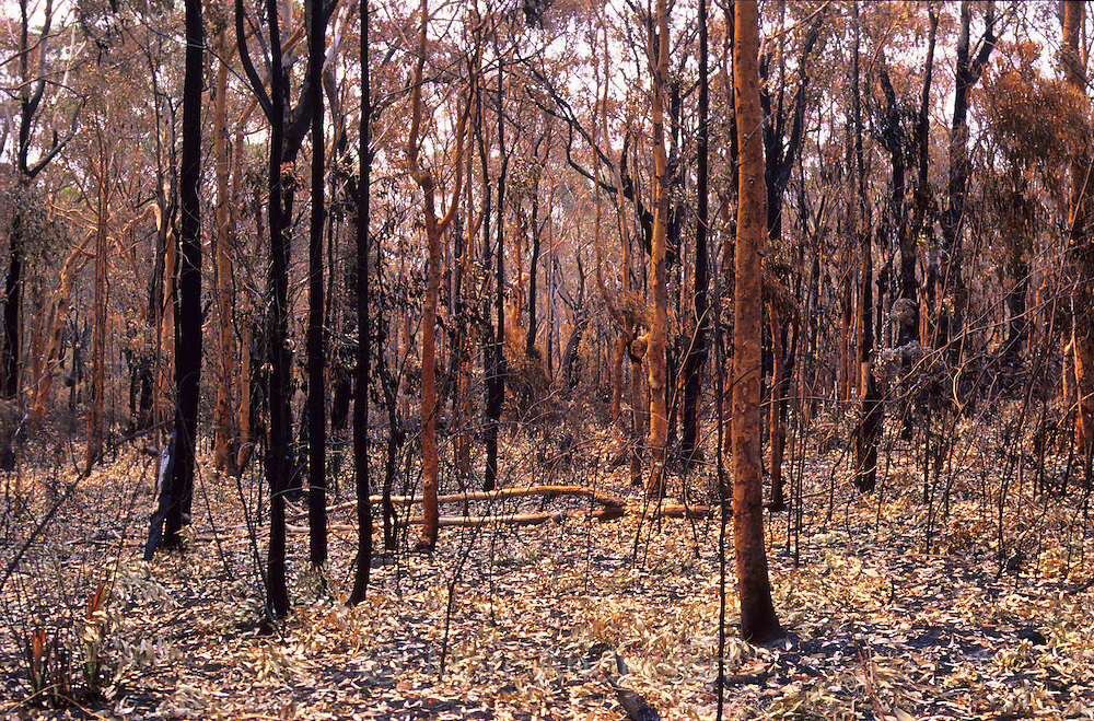 The results of a bush fire, Gooroowa Ridge, Royal National Park, Australia.