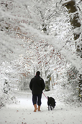 (c) London News Pictures 29/11/2010.A dog walker braves snowy conditions in Harrogate, North Yorkshire.Sam Atkins/London News Pictures