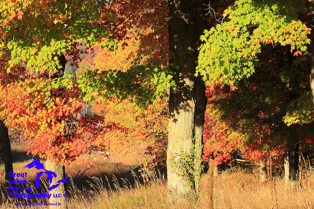 Northern Michigan hardwood forests offer every imaginable shade of color during autumn.