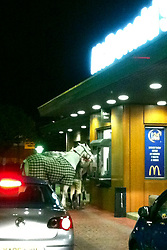 "©London News pictures...  Horses at Macdonalds restaurant. Around midnight, Tris Brown and friends pulled into the McDonalds drive-in in Aintree, near the famous racecourse, to discover two horses being served. It is understood their owner had been celebrating after a win at a showjumping event at Aintree that day, and had fallen out with his girlfriend. A crowd of onlookers grew as he led the horses away, while being chased by police officers who had arrived on the scene.  He also tried to mount one of the horses but failed.  Police vans managed to encircle the horses and detain the owner, while a horsebox supposedly owned by his partner arrived to transport the horses away. ""It was hilarious,"" said bystander Tris Brown, who took the picture on his phone,  ""Not only did we see the once-in-a-lifetime vision of horses being served at McDonalds, but we also watched the owner try to run away from the police, while failing to get on his horse.  He should have had the perfect getaway, but instead it's a tale of whoaa!"""
