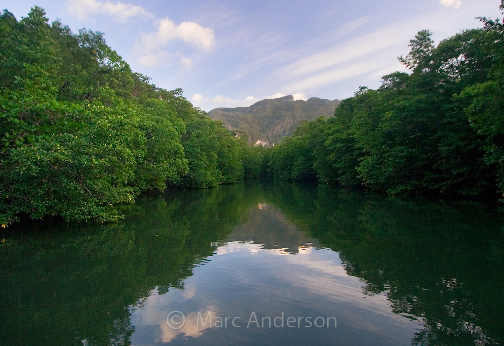 A mangrove lined river, Palawan, Philippines