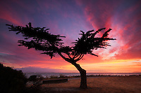 Lonesome Cypress Tree, Alameda, California<br /> <br /> Backstory:<br /> Living around the San Francisco Bay, wind is a common fact of life. Since wind is invisible we're left with photographing the result of the wind; gnarled tree limbs in this instance.<br /> <br /> Year Photographed: 2014<br /> <br /> Print Edition Type: Limited - Exclusive Tier 1 (Call or email to inquire.)