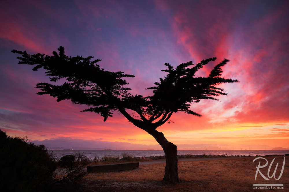 Lonesome Cypress Tree, Alameda, California<br />