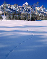 Grand Teton National Park in winter Wyoming USA