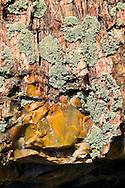 lichen on petrified wood in Arizona Petrified Wood Natural Forest