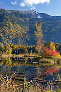 Fall foliage at Cheam Lake Wetlands Regional Park in Popkum, British Columbia, Canada. Most of the color in the background is provided by Bigleaf Maples (Acer macrophyllum). Mount Archibald is in the background.