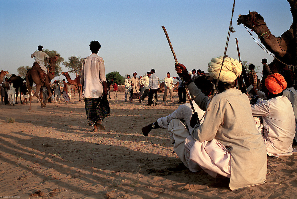 — Camel herders from northern Rajasthan buy and sell their livestock at local camel fairs.