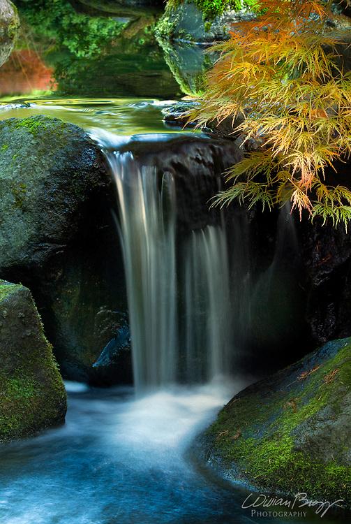 In the Garden of Zen