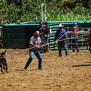 05-26 Calf Roping