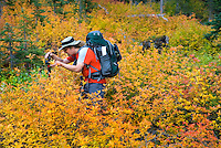 Backpacker photographing foliage displaying fall colors, Okanogan National Forest Washington USA