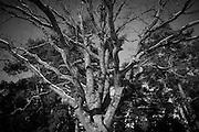 Träd på Skogskyrkogården i Stockholm