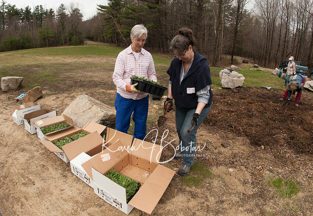 Pat Anderson and Lynn Reade plant asters in the flower garden at the entrance of Gunstock Resort on Saturday morning for Laconia Rotary's volunteer service project.  (Karen Bobotas/for the Laconia Daily Sun)