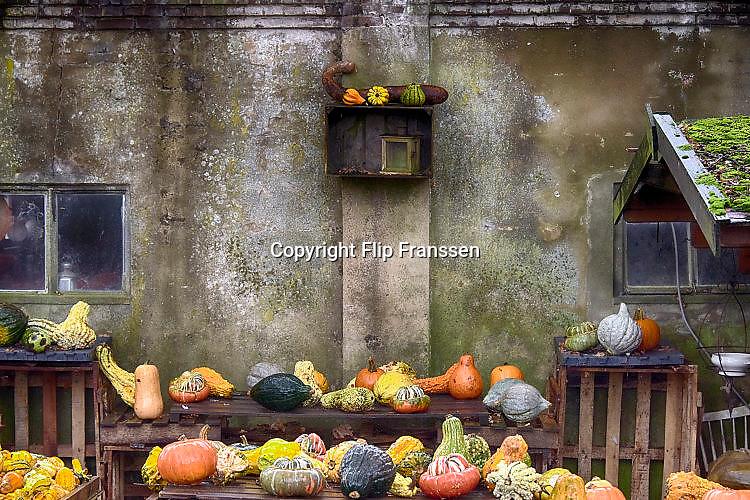 Nederland, Groesbeek, 23-10-2017 Pompoenverkoop bij een boer aan huis. Als extra bijverdienste verkopen veel boeren pompoenen en kalebassen. Voorbijgangers kunnen een pompoen kopen om als sierobject te hebben of om soep van te maken. Ook bij Halloween worden pompoenen gebruikt. FOTO: FLIP FRANSSEN