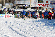 3/4/2007:  Willow, Alaska -  Veteran DeeDee Jonrowe of Willow, AK, in her 25th Iditarod heads out at the start of the 35th Iditarod Sled Dog Race.  Jonrowe would have to pull out of the race a day later after taking a hard fall injuring one of her hands bad enough that she could not care for her dogs as needed on the trail.