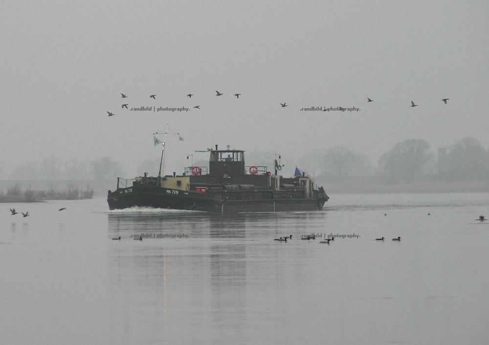 An einem dunklen Wintertag schippert ein Kahn die Elbe bei Schnackenburg hinauf. Im Wasser und in der Luft sind zahlreiche Enten...Mallard duks flying around a vessel on a grey day at the Elbe River.
