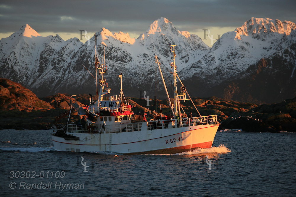 Herring boat follows channel from harbor past snowy mountains on an early afternoon Arctic winter sunset onto open Norwegian Sea; Svolvaer, Lofoten Islands, Norway.