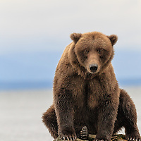 IBA Bear Photo Database