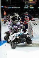 KELOWNA, CANADA - MARCH 26: Rocky Racoon, the mascot of the Kelowna Rockets exits the ice against the Kamloops Blazers on March 26, 2016 at Prospera Place in Kelowna, British Columbia, Canada.  (Photo by Marissa Baecker/Shoot the Breeze)  *** Local Caption *** Rocky Racoon;