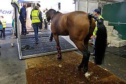 Gazelle de la Brasserie of Karin Donckers with groom Jori Gildersleeve<br /> Departure of the horses from Liege Airport to Lexington<br /> Alltech FEI World Equestrian Games - Kentucky 2010<br /> © Dirk Caremans