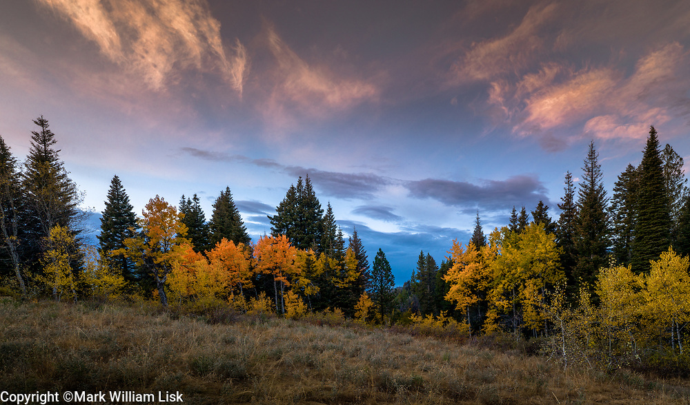 Aspens turn in early fall high in the Boise National Forest.