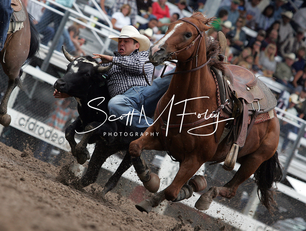 Bull Dogger Anton R Helfrich pins his steer with a time of 8.4 moving him into the first place position, 27 July 2007, Cheyenne Frontier Days