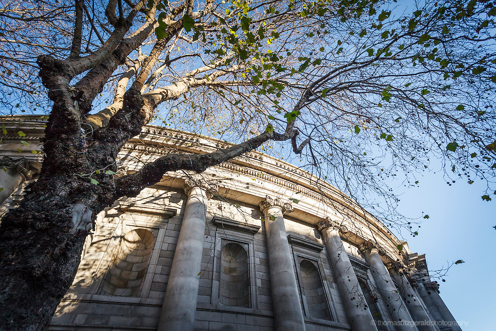 2012: Dublin, Ireland. A gnarley tree in front of the Bank of Ireland Building on Dame Street in Dublin City