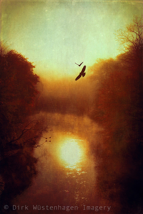 License: http://www.trevillion.com/search/preview/bird-flying-over-river-at-sunset/0_00218420.html