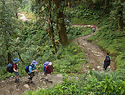 Winding trail near Dhampus in the Annapurna Range of Nepal.
