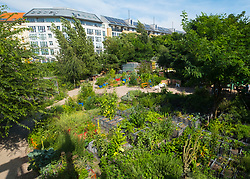 view across urban city community garden called Prinzessinnengarten in Kreuzberg, Berlin, Germany.