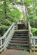 The State of Michigan has created a very nice facility at the Cut River Gorge, which includes this huge stairway. It's really tempting to go all the way to the bottom, but one must be certain of one's desire to go all the way back up (200 steps). The rather ubiquitous Upper Peninsula mosquitoes down in the gorge can really encourage you to keep moving on the way back up. I highly recommend insect repellant for this hike.