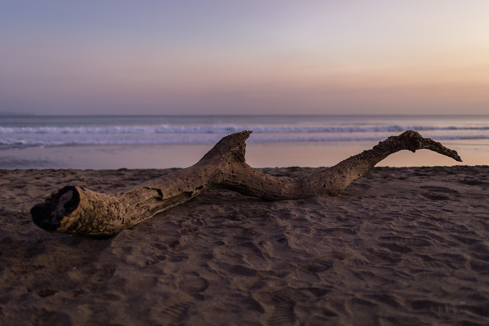 A tree branch at Kayu Putih beach in Canggu.