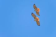 Photographs of wildlife, birds in California