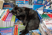 A cat lounges on books on a display table in Cortina d'Ampezzo, Dolomites, Italy, Europe. The ski resort of Cortina d'Ampezzo (Ladin: Anpëz, German: Hayden, at 1224 meters/4016 feet) is surrounded by the Dolomites (or Dolomiti, part of the Southern Limestone Alps) at the head of Valle del Boite, in the Province of Belluno, Veneto region, Italy. Cortina gained worldwide fame after hosting the 1956 Winter Olympics. UNESCO honored the Dolomites as a natural World Heritage Site in 2009.