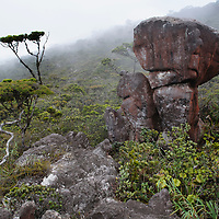 Large sandstone boulders and stunted elfin forest the summit plateau of Gunung Murud, Sarawak's highest mountain. Sarawak, Malaysia.