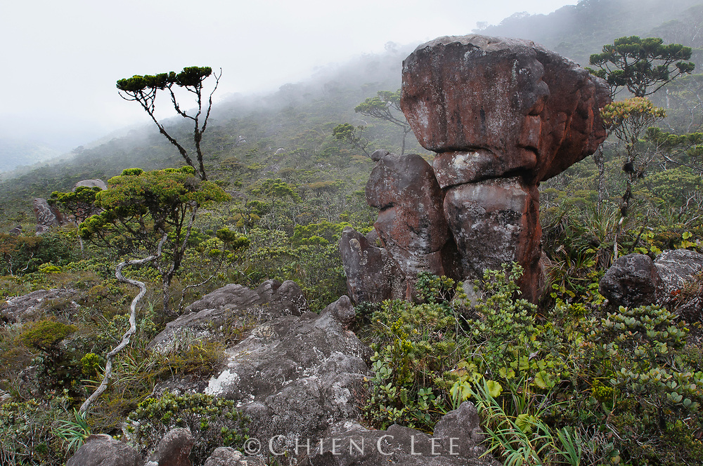 Large sandstone boulders and stunted elfin forest the summit plateau of Gunung Murud, Sarawak's highest mountain. Sarawak, Malaysia.