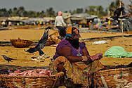 A woman preparing fish fillets on the beach at the Negombo Fish market, Negombo, Sri Lanka. This fish market is the second largest fish market in Sri Lanka. It is situated near the Old Dutch Fort Gate and held every day except Sundays