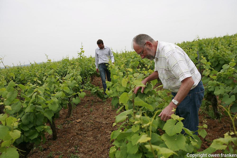 Muscadet winemaker Pierre Luneau-Papin and his son, Pierre-Marie....on La Butte de La Roche vineyards on a hill..Photograph by Owen Franken