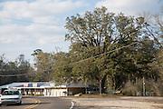 oak tree and power lines along Highway 36 in Abita Springs, Louisiana