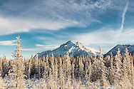 Spruce trees covered in hoarfrost frame Pioneer Peak in Southcentral Alaska. Winter. Afternoon.