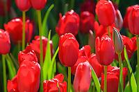 Longwood Gardens, Kennett Square, Pennsylvania, USA