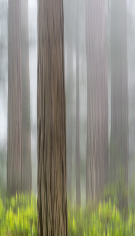 A stitched panorama from five images created using ICM (Intentional Camera Movement) and a slow shutter speed.
