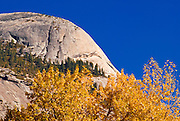Fall color under North Dome, Yosemite Valley, Yosemite National Park, California