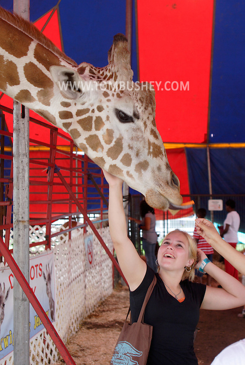 Mechanicstown, NY - A young woman pets a giraffe as it grabs a carrot with its tongue at the Orange County Fair on July 29, 2007..