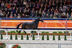 547, Mansion<br /> KWPN hengstenkeuring - 's Hertogenbosch 2020<br /> © Hippo Foto - Dirk Caremans<br /> 31/01/2020