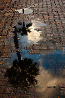 Puddles on the bricks along Carerra Street reflect Sabal Palms after a late afternoon thunderstorm in St. Augustine, Florida.