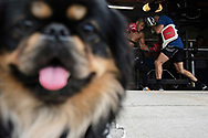 June 7, 2017 / Yorba Linda, Calif.<br /> <br /> While TJ Dillashaw's girlfriend's dog Mijo hangs out in the driveway, Aaron Pico, 20, spars with fellow MMA pro Juan Archuleta, 29, (blue shirt) in the garage of their strength and conditioning coach Sam Calavitta. Pico is high school wrestling star and Golden Gloves champ who is training for his MMA debut in the &ldquo;Bellator 180&rdquo; card on June 24, 2017 at Madison Square Garden. (Melissa Lyttle for ESPN)
