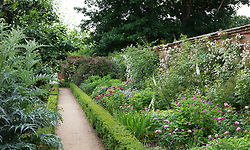 The walled rose garden at Mottisfont. Path with low box hedges. Rosa 'The Garland' and Rosa 'Rambling Rector' trained on the walls