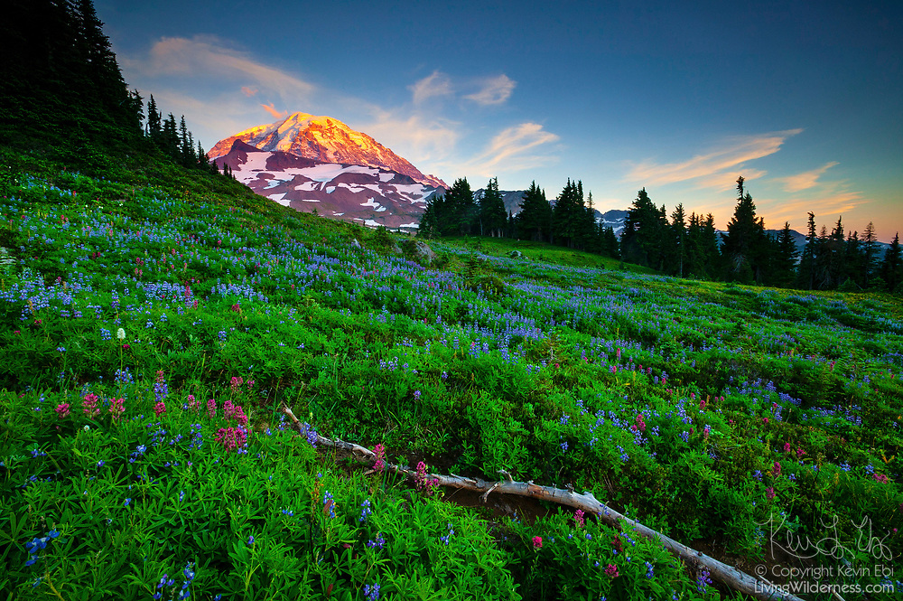 Cirrus clouds surround the summit over Mount Rainier, standing tall over a field of summer wildflowers at Spray Park in Mount Rainier National Park, Washington.