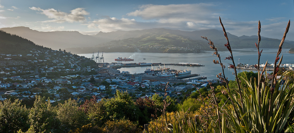Panoramic view of the Wellington ferry leaving Lyttelton harbour early morning, framed by flowering flax and native bush