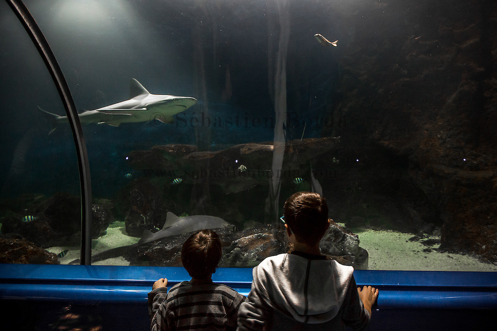 Enfants observant un requin &agrave; l'int&eacute;rieur du tunnel des requins au Marineland d'Antibes // Chlidren observing a shark inside shark tunnel in Antibes Marineland<br />